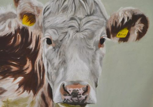 'Life' – Hereford Cow