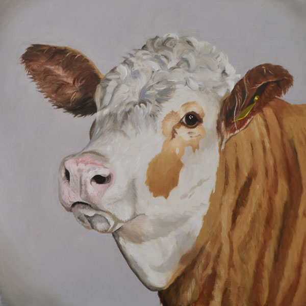 Oil painting of Hereford cow
