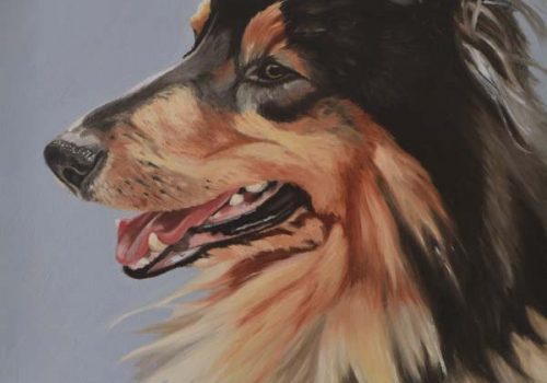 Oil Painting Of Ted, Rough Collie