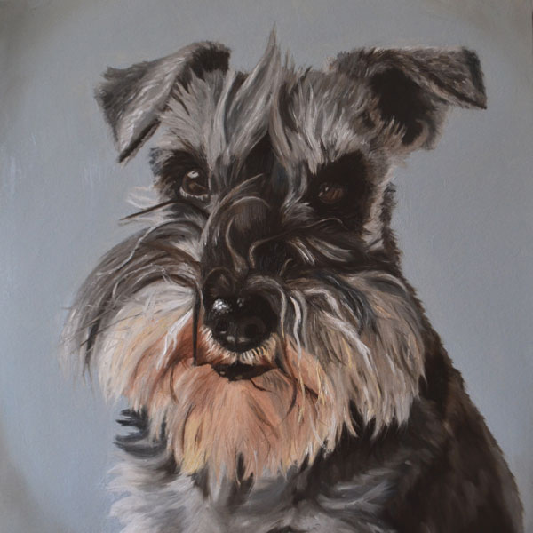 Miniature Schnauzer Dog Portrait Oil Painting