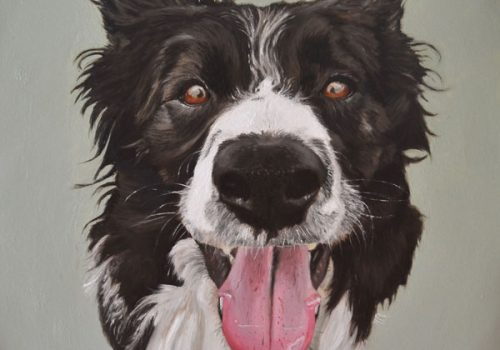 Oil Painting Of Cecil, Border Collie