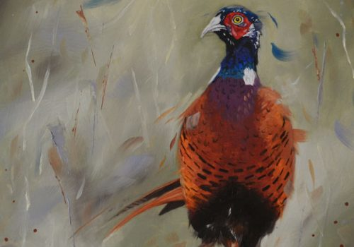 Dashing – Pheasant