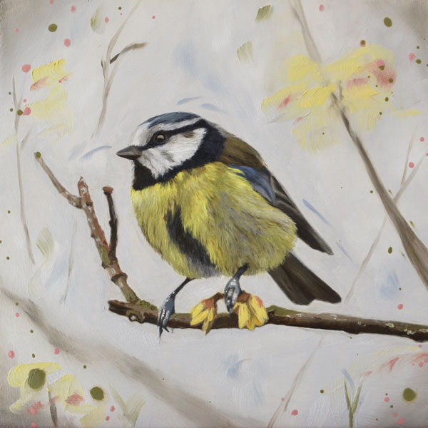 Winter sweet (blue tit)
