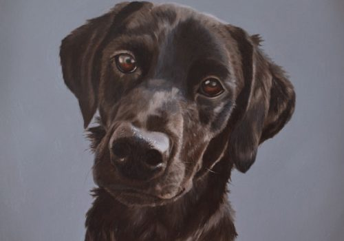 Black Labrador Dog Portrait In Oils