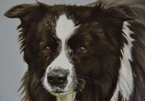 Piper - Border Collie Oil Painting
