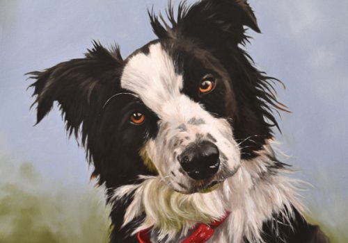 Border Collie Dog Portrait In Oils