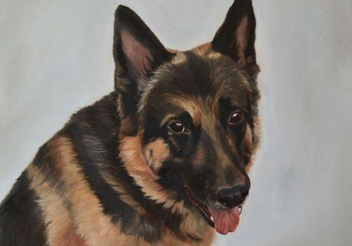 German Shepherd Dog Portrait In Oils