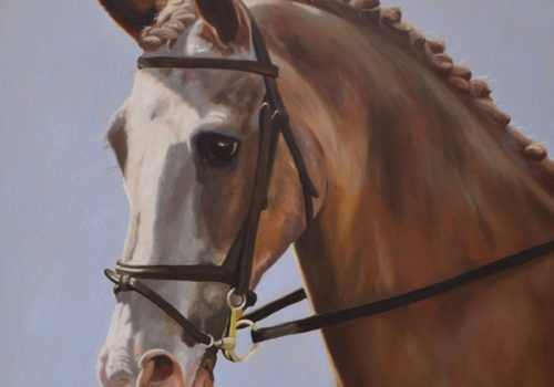 Strawberry Roan Horse Portrait